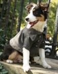 big-dog-clothing-company