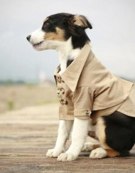 cute_dog_clothes_1